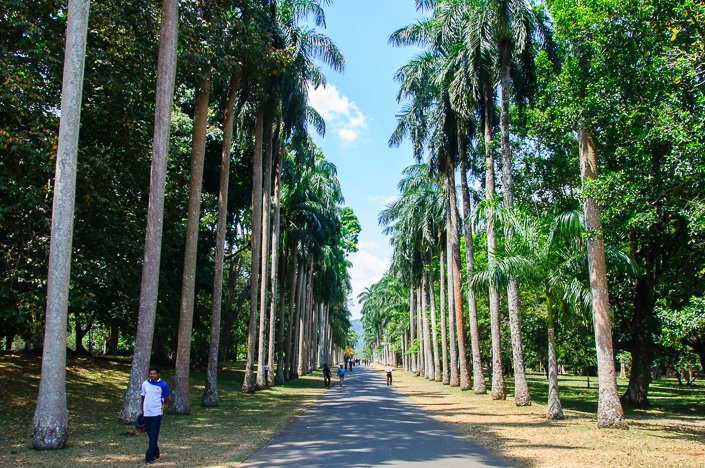 جانب من الحديقة سريلانكا كاندي
