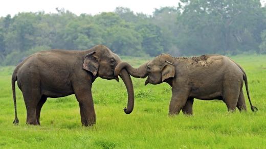 صورة للأفيال في الحديقة الوطنية