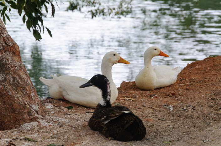 طيور البحيرة السفر الى سريلانكا العرب المسافرون