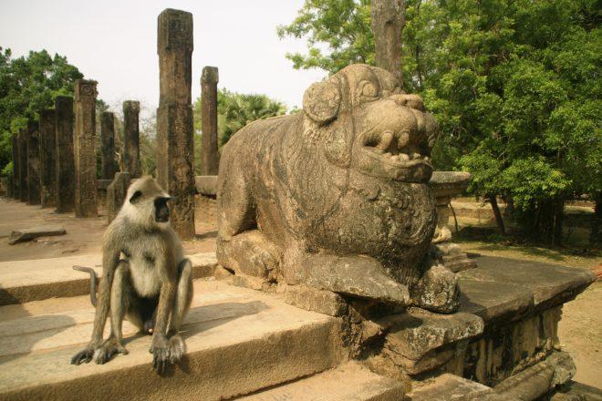 اسطورة المملكة التي تحكمها القرود أثناء سياحتي في سريلانكا