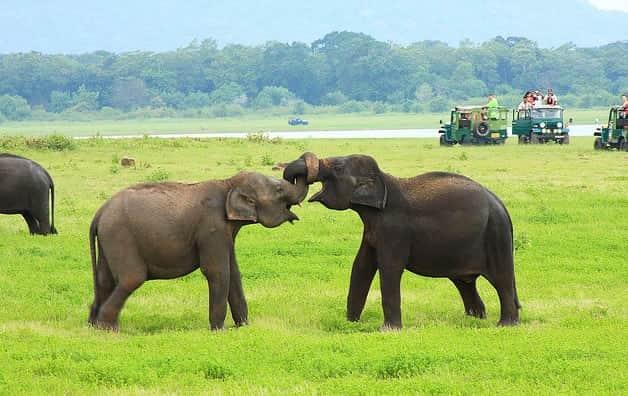رحلة سفاري في سريلانكا