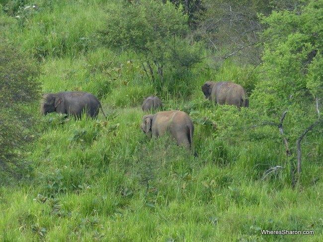 مجموعة من الأفيال