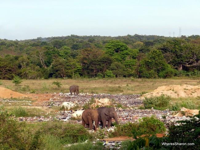 أفيال في البرية